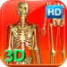 3D Human Skeleton HD